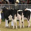 Royal16_Holstein_21M9A0221