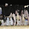 Royal16_Holstein_L32A4174