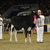 Royal16_Holstein_L32A4033