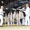 Royal16_Holstein_L32A4087