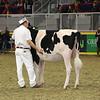 Royal16_Holstein_L32A4153
