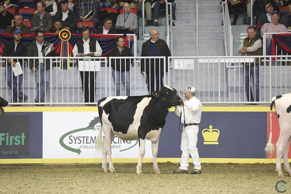 Royal16_Holstein_1M9A9936