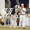 Royal16_Holstein_L32A3904