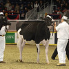 Royal16_Holstein_1M9A9991