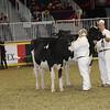Royal16_Holstein_21M9A0282