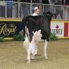 Royal16_Holstein_21M9A0302