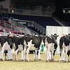 Royal16_Holstein_L32A3979