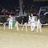 Royal16_Holstein_L32A4019
