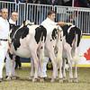 Royal16_Holstein_L32A4096