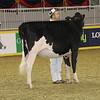 Royal16_Holstein_21M9A0344