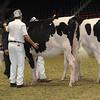Royal16_Holstein_21M9A0117