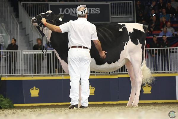 Royal16_Holstein_L32A4146