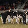 Royal16_Holstein_21M9A0034