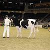 Royal16_Holstein_21M9A0085