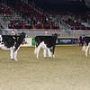 Royal16_Holstein_L32A4170