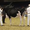 Royal16_Holstein_21M9A0112