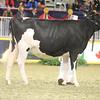 Royal16_Holstein_21M9A0203