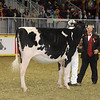 Royal16_Holstein_21M9A0342