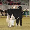 Royal16_Holstein_21M9A0337