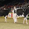 Royal16_Holstein_21M9A0142