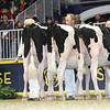 Royal16_Holstein_L32A4094