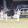 Royal16_Holstein_L32A4018