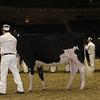 Royal16_Holstein_21M9A0002