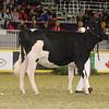 Royal16_Holstein_21M9A0205