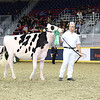 Royal16_Holstein_L32A3943