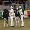 Royal16_Holstein_21M9A0270