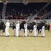 Royal16_Holstein_L32A3967