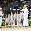 Royal16_Holstein_L32A4086