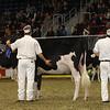 Royal16_Holstein_21M9A0048