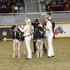 Royal16_Holstein_21M9A0265