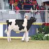 Royal16_Holstein_L32A3869