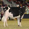 Royal16_Holstein_21M9A0213