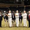 Royal16_Holstein_21M9A0366