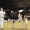 Royal16_Holstein_1M9A9925