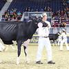 Royal16_Holstein_L32A3924