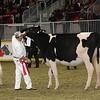 Royal16_Holstein_21M9A0044