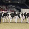 Royal16_Holstein_21M9A0101