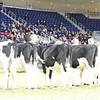 Royal16_Holstein_L32A3910