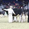 Royal16_Holstein_L32A3994