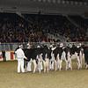 Royal16_Holstein_21M9A0032