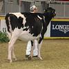 Royal16_Holstein_21M9A0301