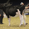 Royal16_Holstein_21M9A0113
