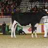 Royal16_Holstein_21M9A0314