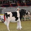 Royal16_Holstein_21M9A0329