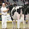 Royal16_Holstein_L32A4119