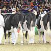 Royal16_Holstein_L32A3997